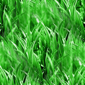 Click to get the codes for this image. Blades Of Grass Seamless Pattern, Plants Background Wallpaper Image or texture free for any profile, webpage, phone, or desktop