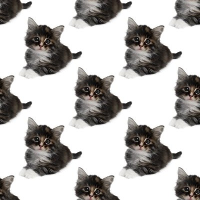 Click to get the codes for this image. Gray Kittens, Cats Background Wallpaper Image or texture free for any profile, webpage, phone, or desktop