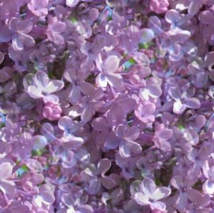 Click to get the codes for this image. Lilacs Seamless Painting, Purple, Flowers Background Wallpaper Image or texture free for any profile, webpage, phone, or desktop