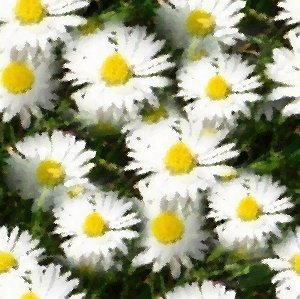 Click to get the codes for this image. White Daisies Seamless Painting, Flowers, Artistic, White Background Wallpaper Image or texture free for any profile, webpage, phone, or desktop