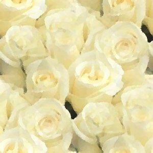 White roses seamless painting background or wallpaper for Cream rose wallpaper